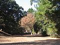 Markham Nature Park 03.JPG