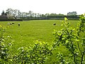 Meadow near Norton Court - geograph.org.uk - 170676.jpg