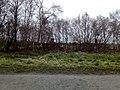 Memorial bench at Ham Wall - 2018-03-09 - Andy Mabbett - 03.jpg