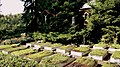 Miechowice - Kościół ewangelicko-augsburski - cmentarzyk przy kościele - panoramio (5).jpg