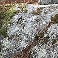 Moaña petroglidos de Torre de Meira.jpg