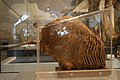 Molaire de mammouth (3076714400).jpg