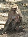 MonkeyForestPietá.jpg