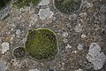 Moss (14015347788).jpg
