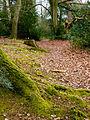 Moss on trunk (7104368555).jpg