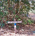 Mount Mitchell 5.6 miles - panoramio.jpg