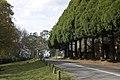 Mount Wilson NSW 2786, Australia - panoramio (35).jpg