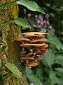 Mushroom Pakke unid 2.jpg