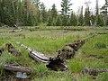 Mustard Creek - panoramio.jpg