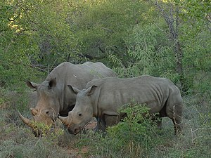 KrugerPark South Africa