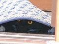NASDAQ the black cat.jpg