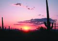 NRCSAZ84005 - Arizona (503)(NRCS Photo Gallery).tif