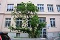 Naturdenkmal 742 2014-05-10 (43) Wien06 Hirschengasse18 Schwarzer Maulbeerbaum GuentherZ.JPG