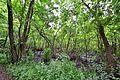 Nature Park 03.JPG