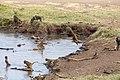 Nature of Ngorongoro Conservation Area (110).jpg