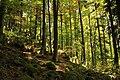 Nature reserve Ptaci stena in autumn 2011 (27).JPG