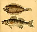 Naturgeschichte in Bildern mit erläuterndem Text (Taf. LIII) (6058665303).jpg