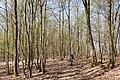 Naturschutz- und Natura 2000-Gebiet Trimberg bei Reichensachsen (4).jpg
