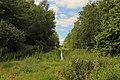 Naturschutzgebiet Neuenkirchener Moor 05.JPG