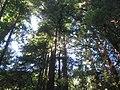 Navarro River Redwoods State Park.jpg