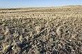 Near Border Hill - Flickr - aspidoscelis (3).jpg