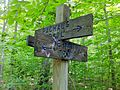 Nehantic Trail and Pachaug Trail western fork split.jpg