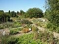 Neuer Botanischer Garten - Alpinum 001.jpg