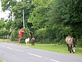 New Forest Ponies, Furzley Common - geograph.org.uk - 1422789.jpg