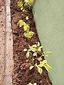 New Plants.jpg