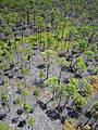 Nicki Fire, Okefenokee NWR - June 19th 2014 (14488389834).jpg