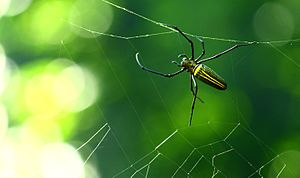 Nilakkal - Photograph of a Spider from the forest interiors