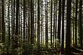 North Vancouver Forest-a.jpg