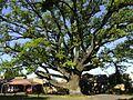 Oak Avenue, Potchefstroom-001.jpg