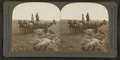 Oat field, showing the prarie, Illinois, U.S.A, by Keystone View Company.png