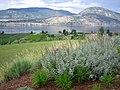 Okanagan Valley wine country views 04.jpg