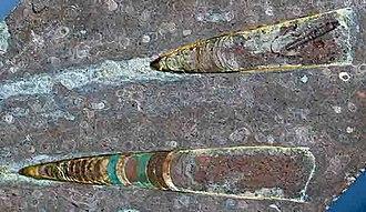 Orthocone - Fossilised Orthoceras orthocones.