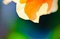 Orange Hibiscus Glow-1.jpg