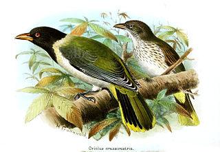 1857 in birding and ornithology
