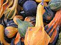 Ornamental gourds.jpg