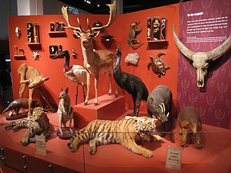 Zoological specimen - An array of zoological specimens at the Natural History Museum at the University of Oslo