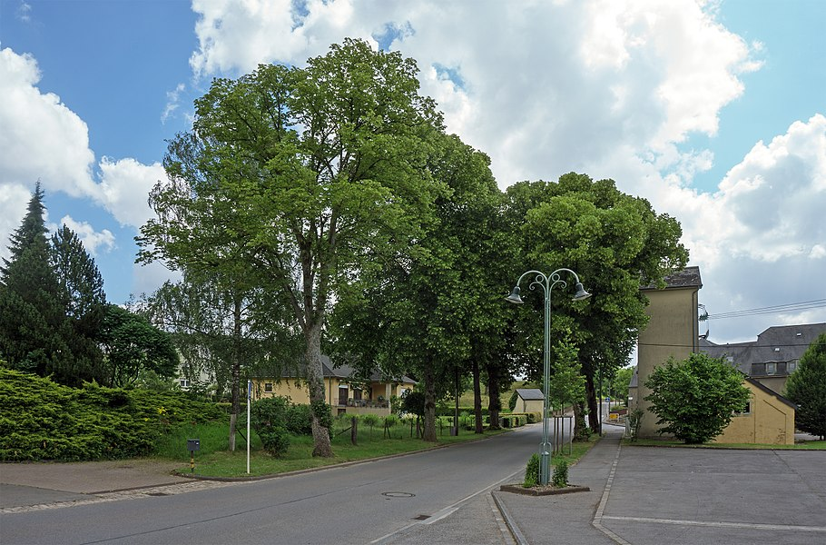 Lime trees bordering the N23 in Ospern near the cultural center