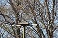 Osprey nesting (26136818396).jpg