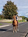 Out for a morning trot on Tandragee Street, Richhill - geograph.org.uk - 586812.jpg