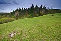 Přírodní rezervace Nebrová, okres Ilava (08).jpg
