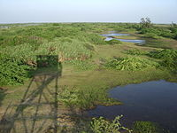 view of green swamps from an elevated point