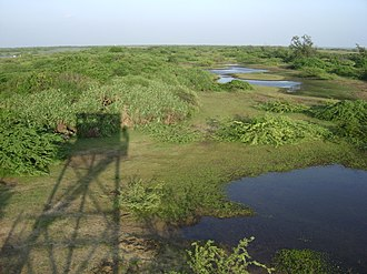 Vedaranyam - Kodikarai wildlife sanctuary is located in the eastern portion of the Great Vedaranyam Swamp which is connected to the Cauvery river by five freshwater channels.