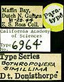 Pachycondyla simillima castype06964-05 label 1.jpg