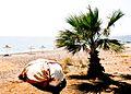 Palme und Boot an einem Strand.jpg