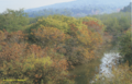 Palustrine Scrub-Shrub Swamp in Maryland (7106803597).png
