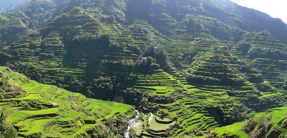 Pana Banaue Rice Terraces (Cropped)